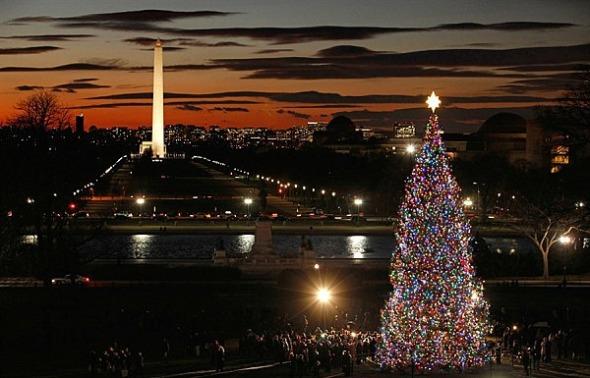 the-u-s-capitol-christmas-tree